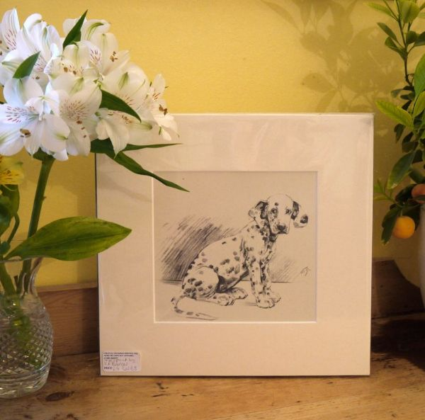 Dalmatian Puppy - Dal B3 - looking naughty! 1940's print by K F Barker
